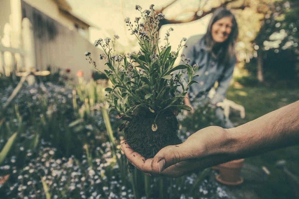 vrtlarenje05-slowage365